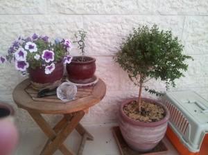 Petunia & Oelbaum 13-10-24